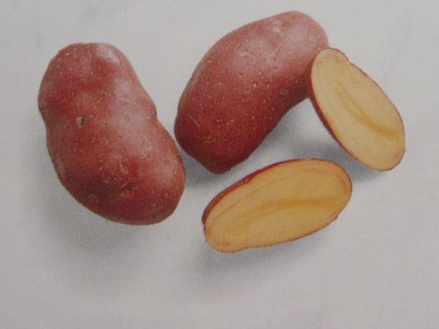 французский сорт картофеля